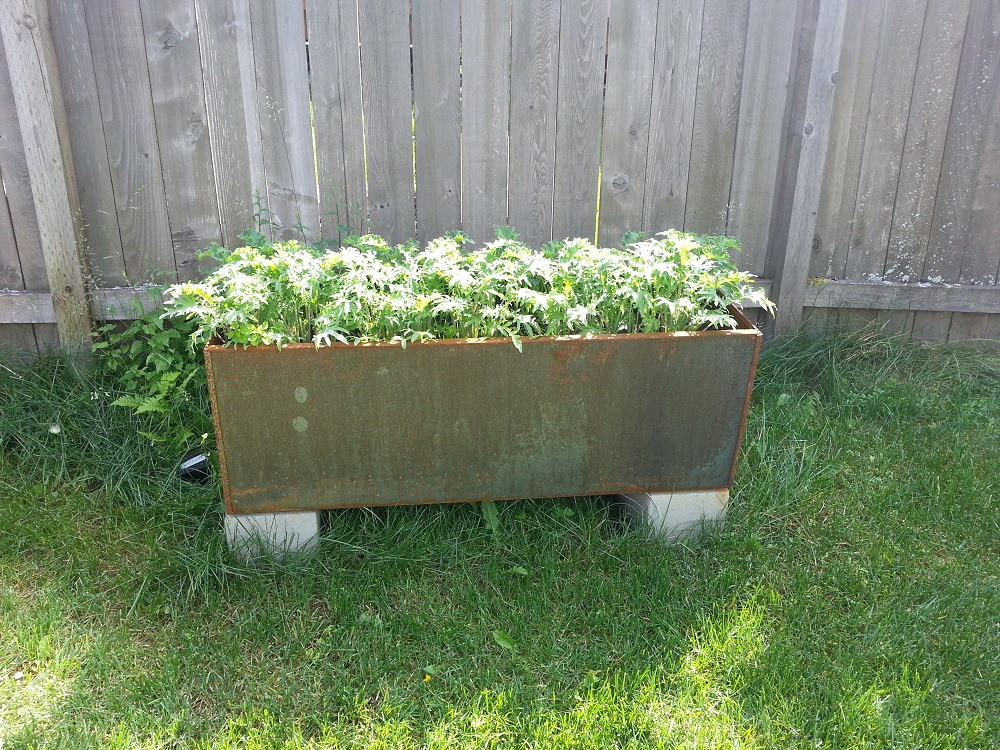 corten steel planter kale