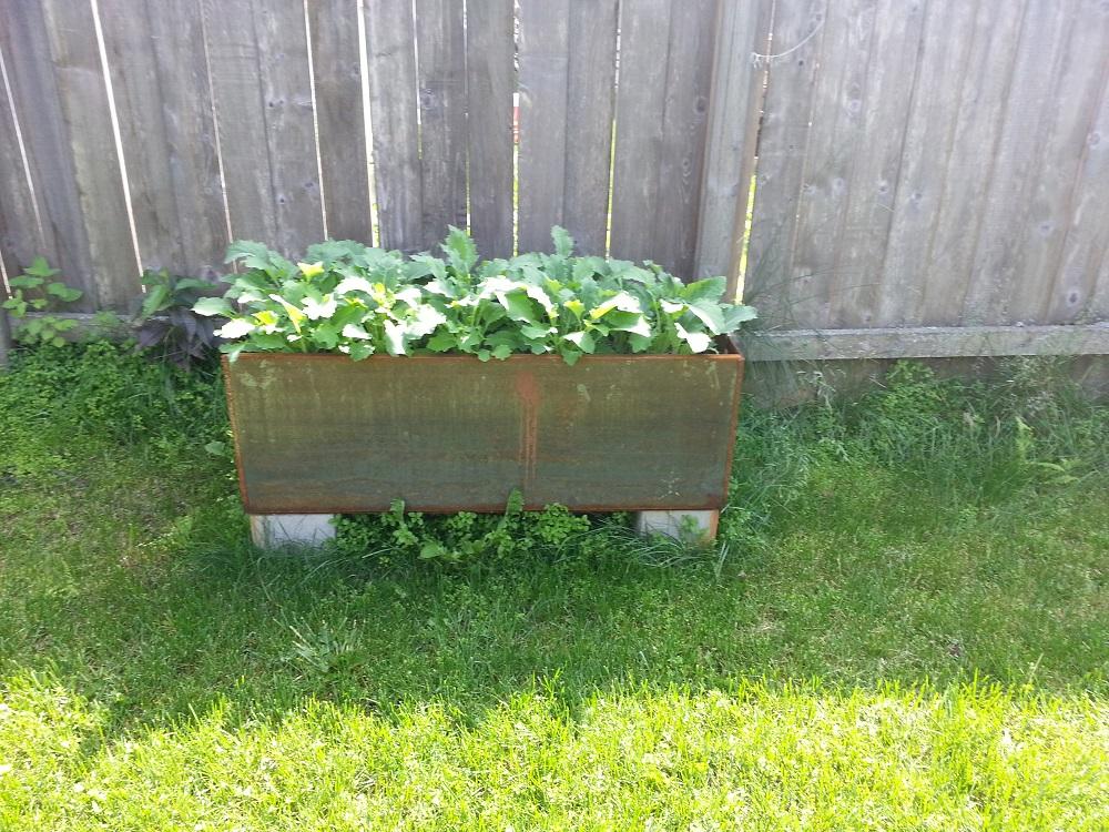 corten steel planters kohlrabi